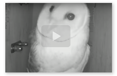 Video thumbnail of owl cam at night