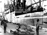 Large bags of lima beans being unloaded.