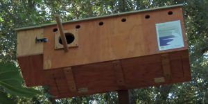 AAPA Honors for Environment Barn Owl Nest Box Video - Film Still